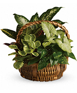 Emerald Garden Basket